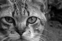 Μια χαριτωμένη μικρή γάτα, γάτα αγάπης, κλείνει επάνω Στοκ Φωτογραφίες