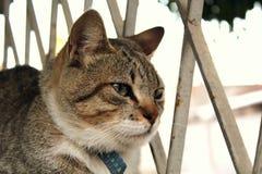 Μια χαριτωμένη μικρή γάτα, γάτα αγάπης, κλείνει επάνω Στοκ Εικόνες