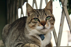 Μια χαριτωμένη μικρή γάτα, γάτα αγάπης Στοκ εικόνα με δικαίωμα ελεύθερης χρήσης