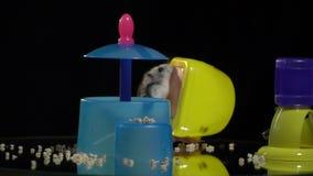 Μια χαριτωμένη χάμστερ αναρριχείται σε έναν πίνακα παρουσίασης καθρεφτών όπου ένας τροφοδότης και ένας μικρός πλαστικός καθρέφτης απόθεμα βίντεο