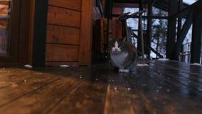 Μια χαριτωμένη χνουδωτή συνεδρίαση γατών κοντά στην πόρτα σπιτιών απόθεμα βίντεο