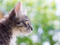 Μια χαριτωμένη χνουδωτή γάτα στο φυσικό υπόβαθρο στοκ εικόνες