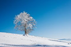 Μια χιονώδης κλίση με το δέντρο πάνω από το βουνό με έναν σαφή μπλε ουρανό μια ηλιόλουστη ημέρα στοκ εικόνες με δικαίωμα ελεύθερης χρήσης