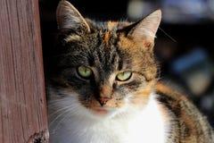 Μια χρωματισμένη γάτα που έχει την άποψη ως προϊστάμενο Στοκ Εικόνες