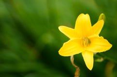 Μια όμορφη άποψη του λουλουδιού Στοκ φωτογραφίες με δικαίωμα ελεύθερης χρήσης