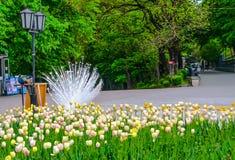 Μια όμορφη αλέα με τα κρεβάτια λουλουδιών Ημέρα βροχής Στοκ Φωτογραφία