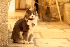 Μια όμορφη γάτα στην οδό Στοκ Εικόνα