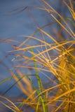 Μια όμορφη, κίτρινη ξηρά ανάπτυξη χλόης στις όχθεις του ποταμού στοκ εικόνες