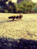 Μια όμορφη μέλισσα Στοκ εικόνες με δικαίωμα ελεύθερης χρήσης