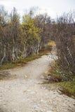 Μια όμορφη πορεία πεζοπορίας μέσω ενός δάσους φθινοπώρου στη Νορβηγία Τοπίο πτώσης στο δάσος Στοκ Εικόνες