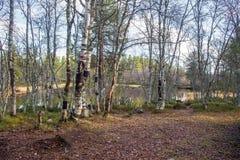 Μια όμορφη πορεία πεζοπορίας μέσω ενός δάσους φθινοπώρου στη Νορβηγία Τοπίο πτώσης στο δάσος Στοκ εικόνα με δικαίωμα ελεύθερης χρήσης