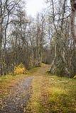 Μια όμορφη πορεία πεζοπορίας μέσω ενός δάσους φθινοπώρου στη Νορβηγία Τοπίο πτώσης στο δάσος Στοκ Εικόνα