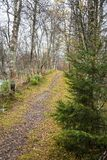 Μια όμορφη πορεία πεζοπορίας μέσω ενός δάσους φθινοπώρου στη Νορβηγία Τοπίο πτώσης στο δάσος Στοκ εικόνες με δικαίωμα ελεύθερης χρήσης