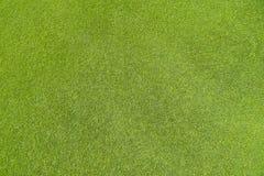 Μια όμορφη πράσινη χλόη στο γήπεδο του γκολφ στοκ εικόνα