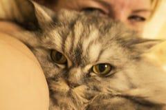 Μια όμορφη χνουδωτή γάτα είναι όταν στοκ εικόνα