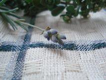 Μια lavender κινηματογράφηση σε πρώτο πλάνο λουλουδιών βρίσκεται σε μια πετσέτα Πορφυρό lavender σε μια πετσέτα καρό Στοκ Εικόνα