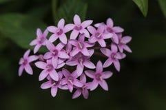 Μια natual ανθοδέσμη λουλουδιών Στοκ Φωτογραφίες