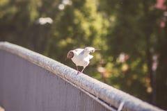 Μια seagull απογείωση Στοκ Εικόνες