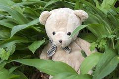 Μια teddy συνεδρίαση baer στο σκόρδο αρκούδων Στοκ Εικόνες