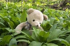 Μια teddy συνεδρίαση baer στο σκόρδο αρκούδων Στοκ φωτογραφία με δικαίωμα ελεύθερης χρήσης