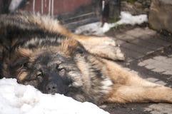 Μιγάς κινηματογράφηση σε πρώτο πλάνο σκυλιών οδών Στοκ Φωτογραφίες