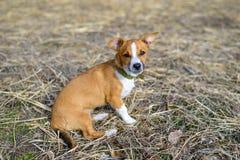 Μιγάς στενός επάνω Σκυλί στην επαρχία στοκ φωτογραφία με δικαίωμα ελεύθερης χρήσης