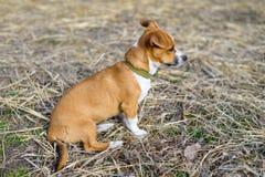 Μιγάς στενός επάνω Σκυλί στην επαρχία στοκ εικόνες