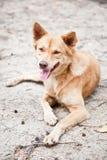 Μιγάς συνεδρίαση σκυλιών στην άμμο Στοκ εικόνες με δικαίωμα ελεύθερης χρήσης