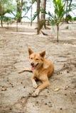 Μιγάς συνεδρίαση σκυλιών στην άμμο Στοκ Φωτογραφία
