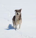 μιγάς υπαίθριος σκυλιών Στοκ Φωτογραφίες