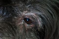 Μιγία σκυλί σκυλιών Στοκ φωτογραφία με δικαίωμα ελεύθερης χρήσης