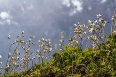 Μικρά άσπρα λουλούδια κάτω από το φως του ήλιου στην Ανδαλουσία την άνοιξη στοκ εικόνα