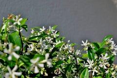 Μικρά άσπρα λουλούδια σε ένα γκρίζο υπόβαθρο στοκ φωτογραφίες
