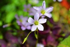 Μικρά άσπρα λουλούδια στοκ φωτογραφία
