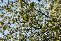 Μικρά άσπρα λουλούδια Στοκ εικόνες με δικαίωμα ελεύθερης χρήσης