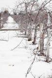 Μικρά δέντρα της Apple κατά τη διάρκεια Wintertime Στοκ φωτογραφία με δικαίωμα ελεύθερης χρήσης