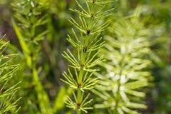 μικρά δέντρα Στοκ φωτογραφία με δικαίωμα ελεύθερης χρήσης