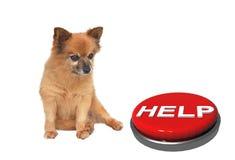Μικρά απομονωμένα μεγάλα μάτια σκυλιών, διάστημα για το κείμενό σας Στοκ εικόνα με δικαίωμα ελεύθερης χρήσης