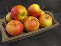 Μικρά βασιλικά μήλα Tenroy Gala Στοκ φωτογραφία με δικαίωμα ελεύθερης χρήσης