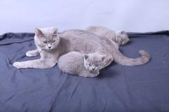 Μικρά γατάκια με τη μητέρα σε ένα μπλε υπόβαθρο Στοκ φωτογραφίες με δικαίωμα ελεύθερης χρήσης
