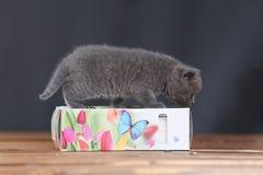 Μικρά γατάκια που παίζουν με τις πετσέτες Στοκ Φωτογραφίες