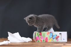 Μικρά γατάκια που παίζουν με τις πετσέτες Στοκ Εικόνες
