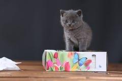 Μικρά γατάκια που παίζουν με τις πετσέτες Στοκ εικόνες με δικαίωμα ελεύθερης χρήσης