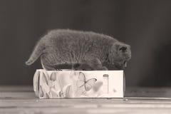 Μικρά γατάκια που παίζουν με τις πετσέτες Στοκ Φωτογραφία