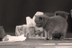 Μικρά γατάκια που παίζουν με τις πετσέτες Στοκ Εικόνα