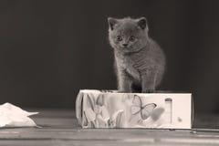Μικρά γατάκια που παίζουν με τις πετσέτες Στοκ φωτογραφία με δικαίωμα ελεύθερης χρήσης