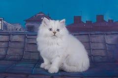 Μικρά γατάκια που περπατούν στη στέγη Στοκ Φωτογραφίες