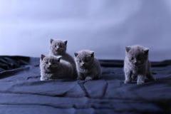 Μικρά γατάκια σε ένα μπλε υπόβαθρο Στοκ Φωτογραφία