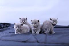Μικρά γατάκια σε ένα μπλε υπόβαθρο Στοκ Φωτογραφίες