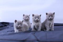 Μικρά γατάκια σε ένα μπλε υπόβαθρο Στοκ φωτογραφία με δικαίωμα ελεύθερης χρήσης